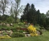 justi-videc-arboretum