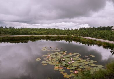 Ideja za nedeljski izlet: Lovrenška jezera