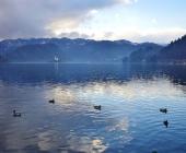 Blejsko jezero v megli