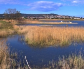 Škocjanski zatok
