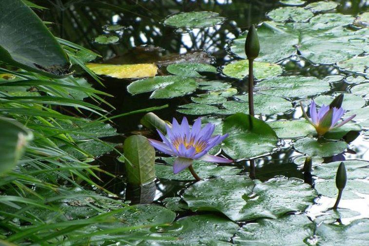 botanicni-vrt