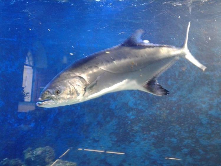 Akvarij Piran